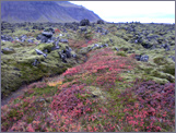 The path the Berserkers cut through the lava field a thousand years ago.